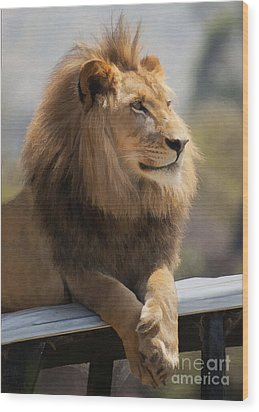 Majestic Lion Wood Print by Sharon Foster