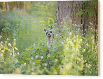 Peek A Boo Wood Print by Carrie Ann Grippo-Pike