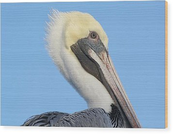 Pelican Up Close  Wood Print by Paulette Thomas