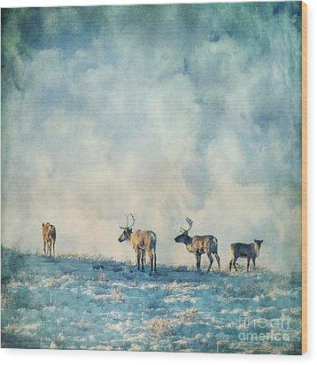 Roam Free Wood Print by Priska Wettstein