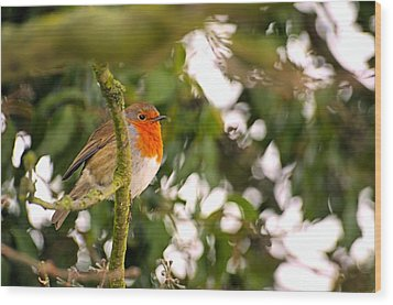 Robin Wood Print by Dave Woodbridge