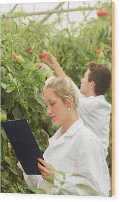 Scientists Examining Tomatoes Wood Print by Gombert, Sigrid