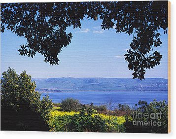Sea Of Galilee From Mount Of The Beatitudes Wood Print by Thomas R Fletcher