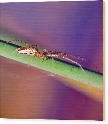 Spider In The Reeds Wood Print by Toppart Sweden