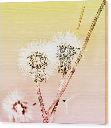 Spring Dandelion Wood Print by Toppart Sweden