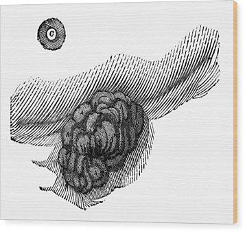 St. Martins Fistula Wood Print by Granger