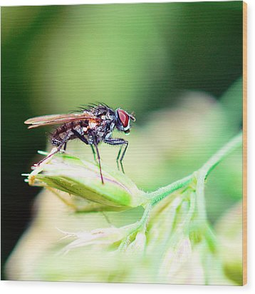 The Fly Wood Print by Toppart Sweden