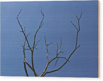 The Lightning Tree Wood Print by David Pyatt