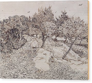 The Olive Trees Wood Print by Vincent Van Gogh