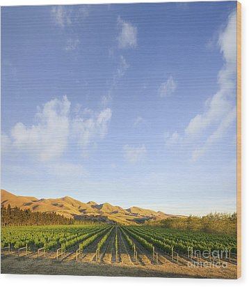 Vineyard In Canterbury New Zealand Wood Print by Colin and Linda McKie