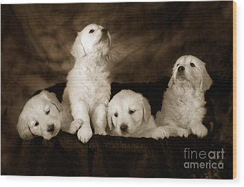 Vintage Festive Puppies Wood Print by Angel  Tarantella
