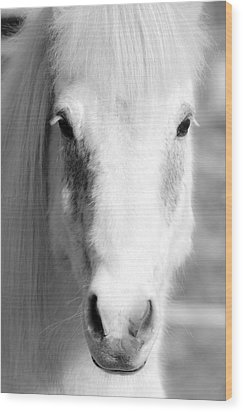 White Horse  Wood Print by Toppart Sweden