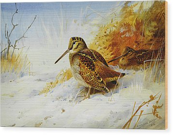 Winter Woodcock  Wood Print by Celestial Images