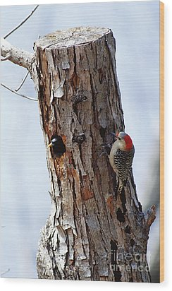 Woodpecker And Starling Fight For Nest Wood Print by Gregory G. Dimijian