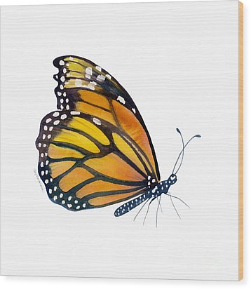 103 Perched Monarch Butterfly Wood Print by Amy Kirkpatrick