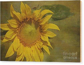 Sunflower Wood Print by Cindi Ressler
