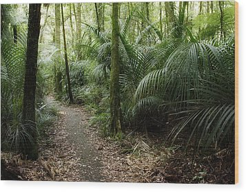 Tropical Forest Wood Print by Les Cunliffe