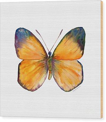 19 Delias Anuna Butterfly Wood Print by Amy Kirkpatrick