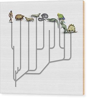 Animal Family Tree Wood Print by Mikkel Juul Jensen