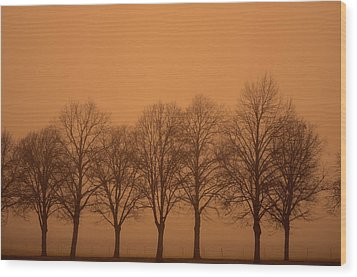 Beautiful Trees In The Fall Wood Print by Toppart Sweden