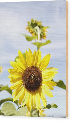 Bee On Flower Wood Print by Les Cunliffe
