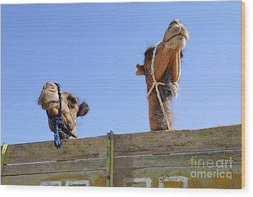 Camels At The Ashgabat Sunday Market In Turkmenistan Wood Print by Robert Preston