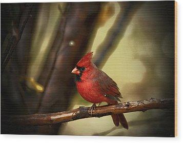 Cardinal Pose Wood Print by Karol Livote