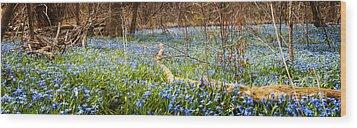 Carpet Of Blue Flowers In Spring Forest Wood Print by Elena Elisseeva