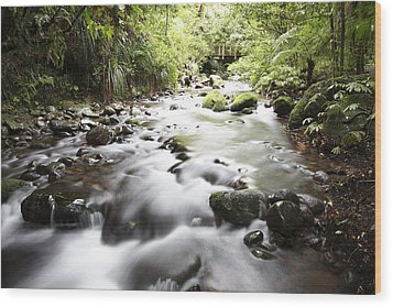 Forest Stream Wood Print by Les Cunliffe