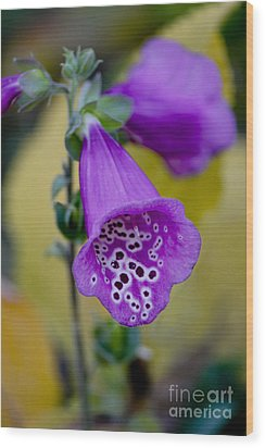 Foxglove Wood Print by Ivete Basso Photography