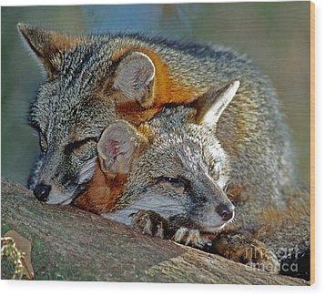 Grey Foxes Wood Print by Millard H. Sharp