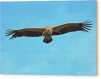 Griffon Vulture In Flight Wood Print by Bildagentur-online/mcphoto-schaef