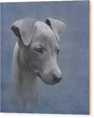 Italian Greyhound Puppy Wood Print by Angie Vogel