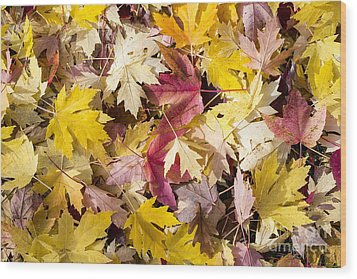 Maple Leaves Wood Print by Steven Ralser