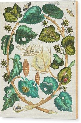 Metamorphosis Insectorum Wood Print by Pg Reproductions