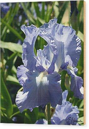 Purple Bearded Iris Wood Print by Ellen Henneke