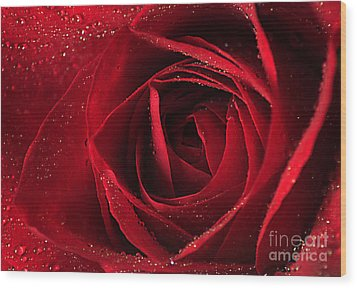 Red Rose Wood Print by Darren Fisher