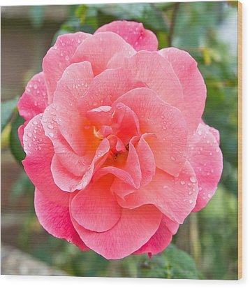 Rose Wood Print by Tom Gowanlock