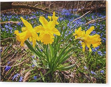Spring Wildflowers Wood Print by Elena Elisseeva