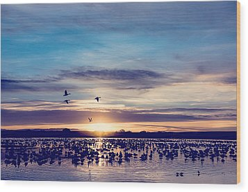 Sunrise - Snow Geese - Birds Wood Print by Shara Lee