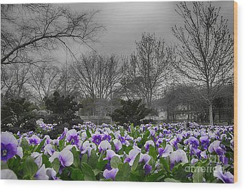 The Color Purple Wood Print by Douglas Barnard