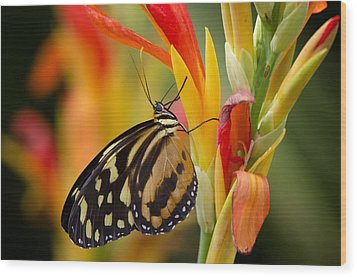 The Postman Butterfly Wood Print by Saija  Lehtonen