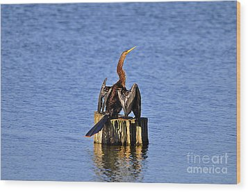 Wet Wings Wood Print by Al Powell Photography USA