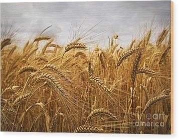 Wheat Wood Print by Elena Elisseeva