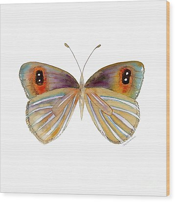 24 Argyrophenga Butterfly Wood Print by Amy Kirkpatrick
