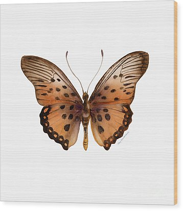 26 Trimans Butterfly Wood Print by Amy Kirkpatrick