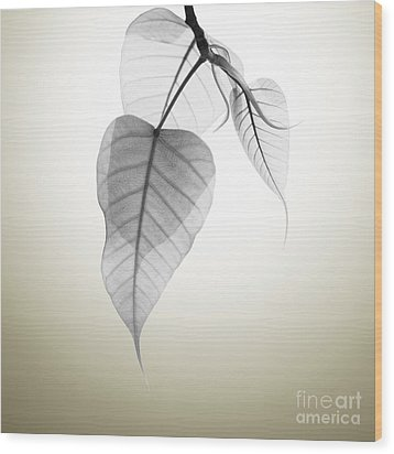 Pho Or Bodhi Wood Print by Atiketta Sangasaeng