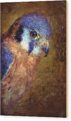American Kestrel Falco Wood Print by Robert Jensen