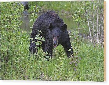 Black Bear Wood Print by Linda Freshwaters Arndt