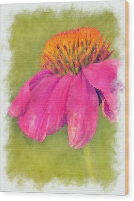 Coneflower Echinacea Wood Print by Robert Jensen